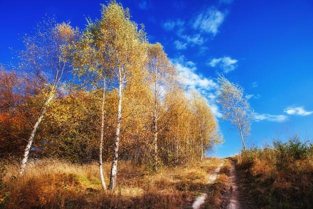 Park krajobrazowy jesień