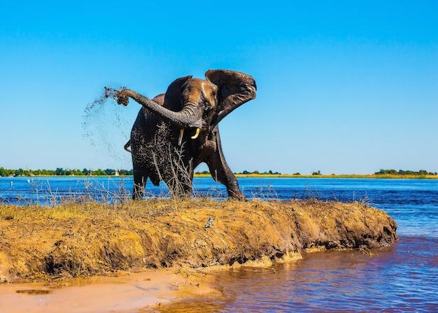 Park narodowy botswana chobe koncepcja egzotycznej turystyki samotnik słoni na wodopoju