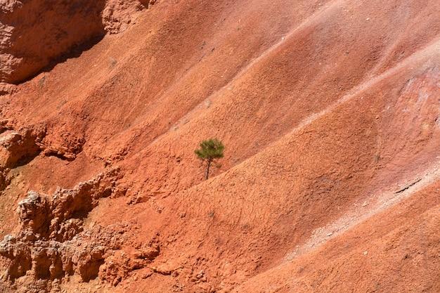 Park narodowy bryce canyon, utah, usa. samotne drzewo w kanionie. formacje skał, tło, wzór i tekstura.
