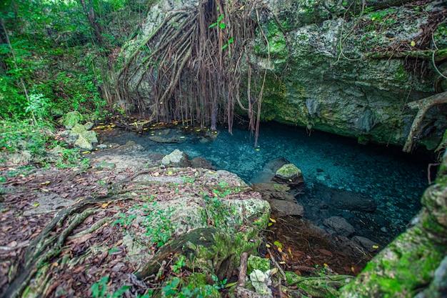 Park narodowy cotubanama na dominikanie, sekcja padre nuestro z typową roślinnością wewnątrz i kamieniołomami, takimi jak cueva de padre nuestro i cueva del chico