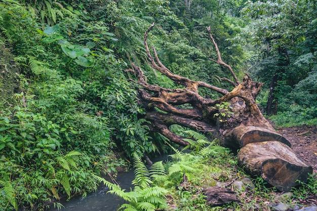 Park narodowy rinjani, lombok, indonezja