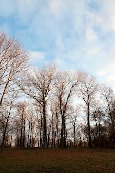 Park o zachodzie słońca - drzewa rosnące w parku o zachodzie słońca, kolorowe niebo od słońca, jesień, sylwetki