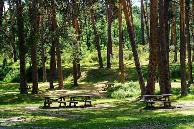 Park piknikowy z ławkami, siedziskami i wysokimi sosnami