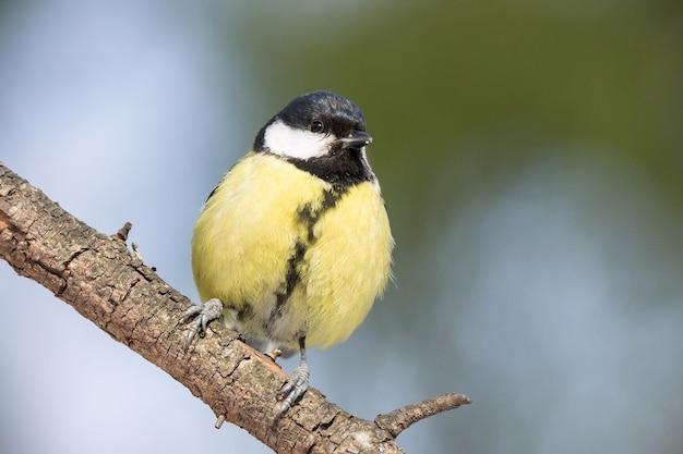 Park ptaków w zimie