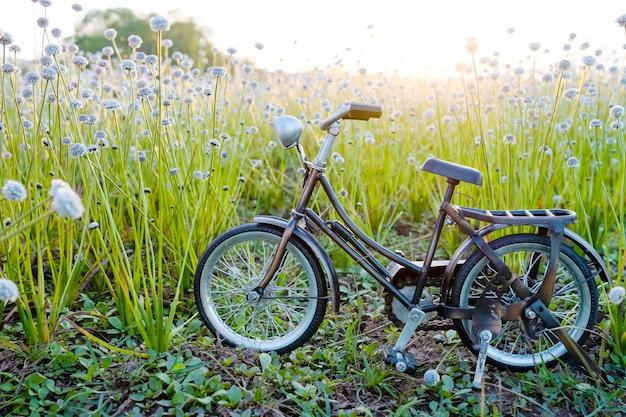 Park rowerowy przy pięknym kwiatem trawie z pięknym światłem.