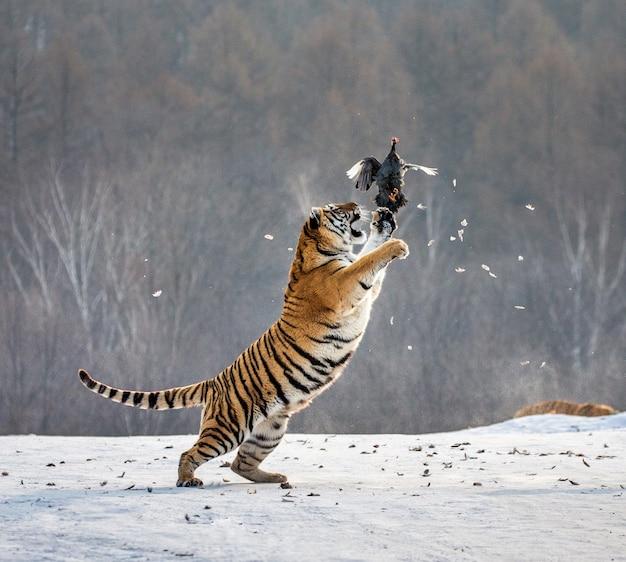 Park tygrysów syberyjskich