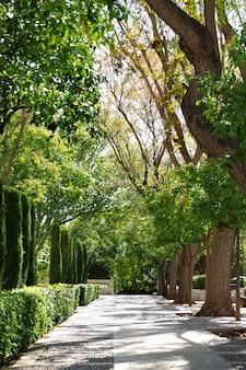 Park w pobliżu katedry w palma de mallorca, hiszpania