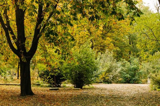 Park z drzewami i krzewami jesienią
