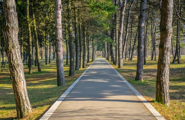 Park z drzewami trawa i ścieżka