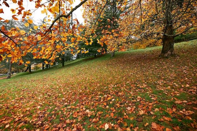 Park z drzewami z żółtymi liśćmi spadającymi na zielonej trawie.