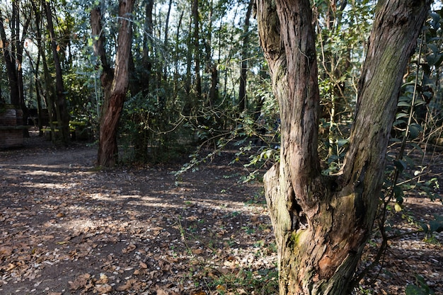 Park z ziemi pokryte suchymi liśćmi