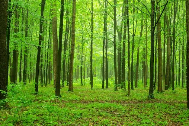 Park zielonego lasu