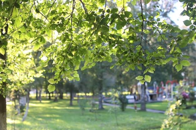 Parkowe słońce liści