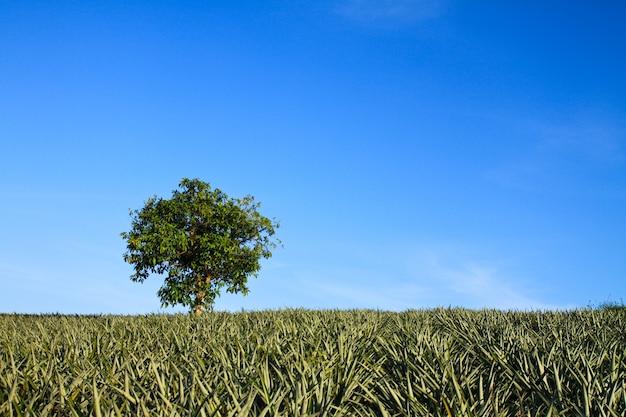 Parku drzewa pastwiska ogrodowe lone