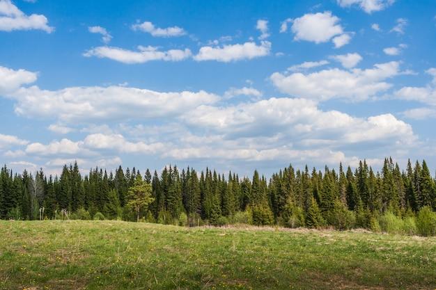 Pas lasu iglastego, przed nim łąka i pochmurne niebo.