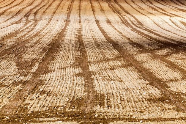 Pas na zaoranym polu uprawnym podczas siewu nowego ozimego zbioru zbóż