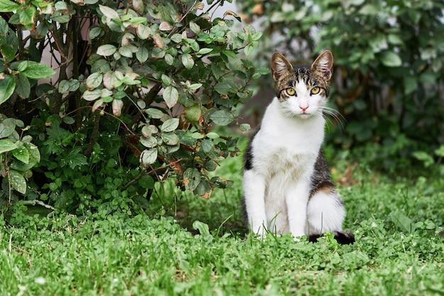 Pasiasty kot bezdomny siedzi na trawie i patrzy w kamerę.