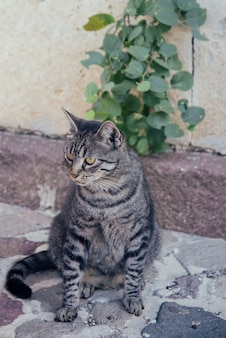 Pasiasty kot siedzi na ulicy