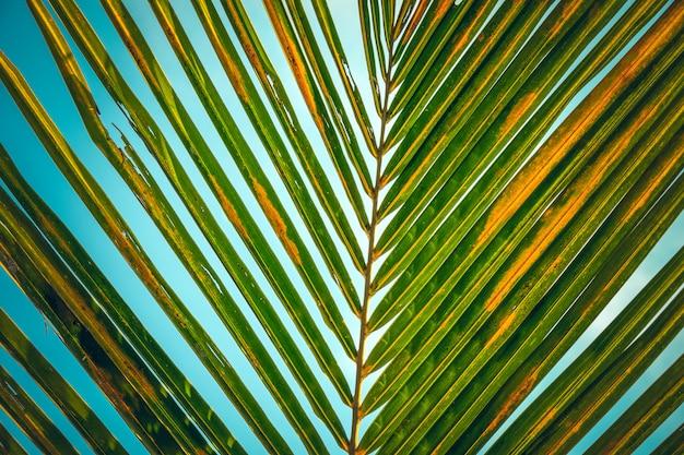 Pasiasty wzór liść palmowy nad niebieskim niebem. streszczenie tło natue.