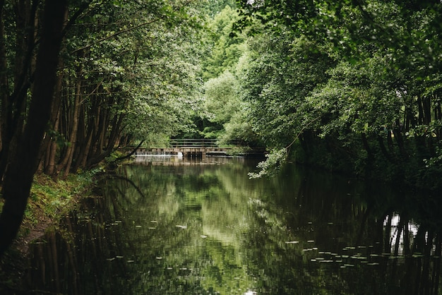Pasig piękny zielony las, most z odbiciem w wodzie