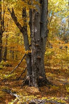 Pasożyt grzyba na pniu drzewa