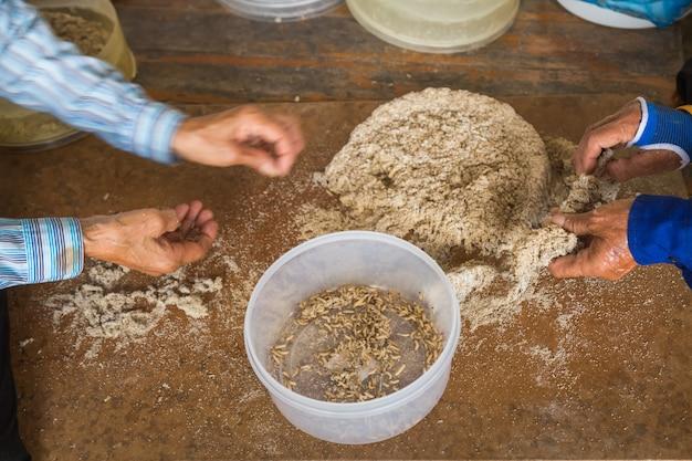 Pasożytnicze osy żyjące na farmie