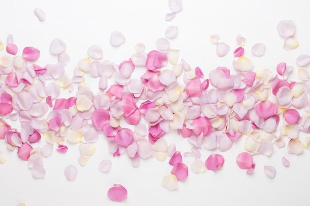 Pastelowe płatki kwiatów róży na białej przestrzeni. leżał płasko, widok z góry, miejsce na kopię.