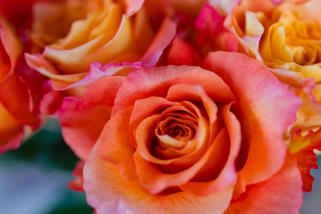 Pastelowe róże tekstury widok z góry z bliska
