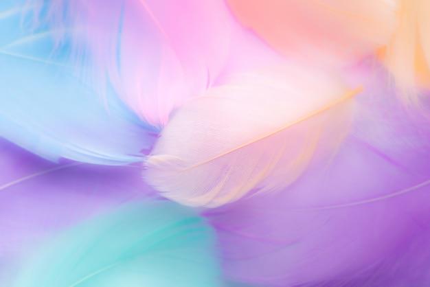 Pastelowy kolor piórka abstrakta tło