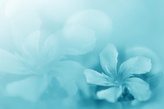 Pastelowy niebieski zielony piękny wiosenny kwiat kwitnący gałąź tło z bezpłatnym miejscem na kopię
