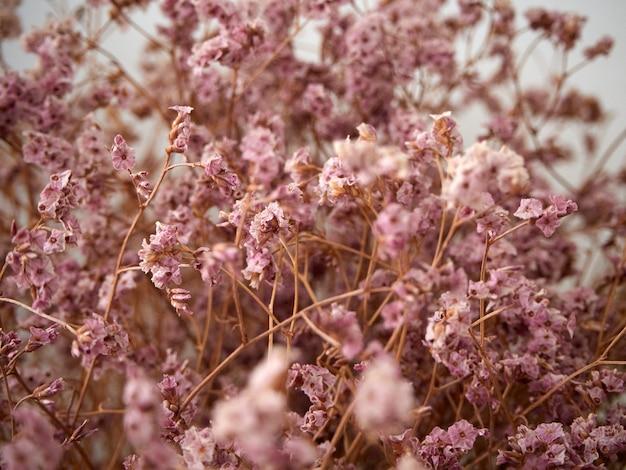 Pastelowy różowy suszony kwiat z bliska