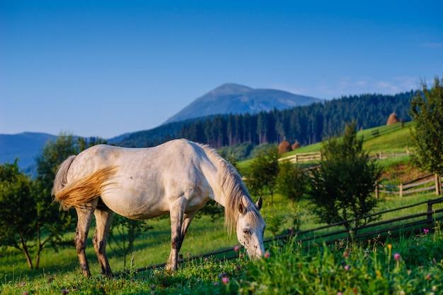 Pastwisko dla koni w lecie