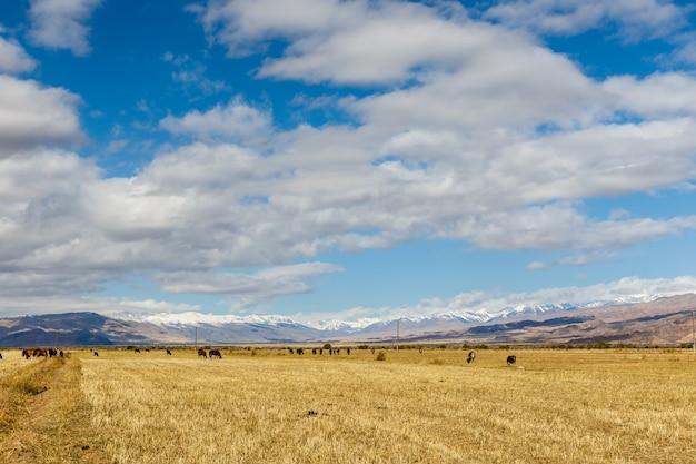 Pastwisko w górach
