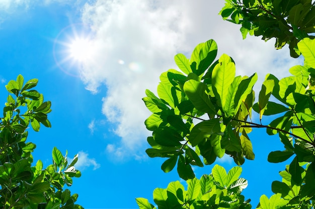 Patrząc do leaf z błękitne niebo i światło wiązki słońca