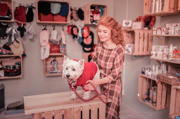 Patrząc na psa. kochający troskliwy rudowłosy właściciel uroczego małego psa patrzący na niego w sklepie zoologicznym