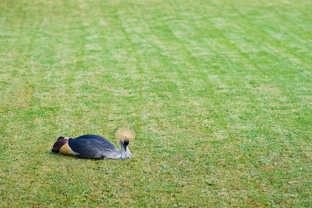 Paw leży na zielonym trawniku. miejsce na tekst. wyspy kanaryjskie, teneryfa.