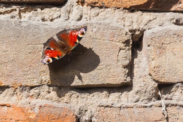 Pawi motyl na kamiennej ścianie