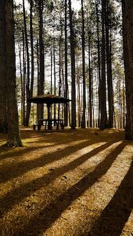 Pawilon w lesie otoczony wysokimi drzewami