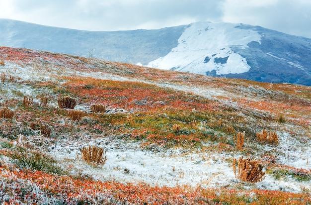 Październik karpacki płaskowyż borghava z pierwszym zimowym śniegiem i jesiennymi kolorowymi krzewami borówki