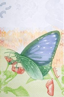 Paziowatych na kwiat z pieniędzy hongkongu