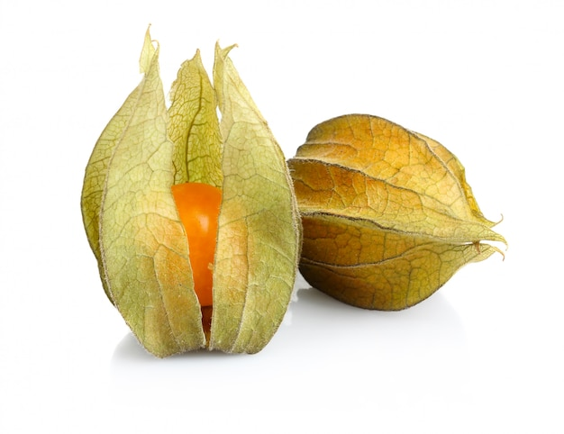 Pęcherzyca owoc na białym tle