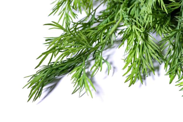 Pęczek koperek świeży, zielony na białym tle. gzielone