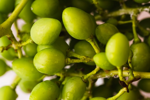 Pęczek surowych owoców mirabelki