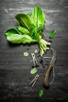 Pęczek świeżego szczawiu z spinaczami do bielizny. na czarnym drewnianym stole.