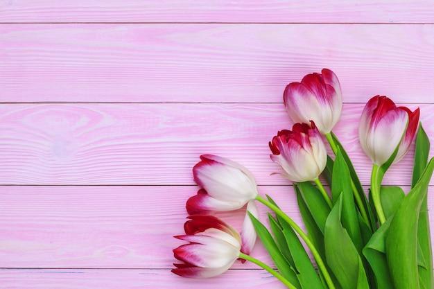 Pęczek świeżych tulipanów na pastelowym różu