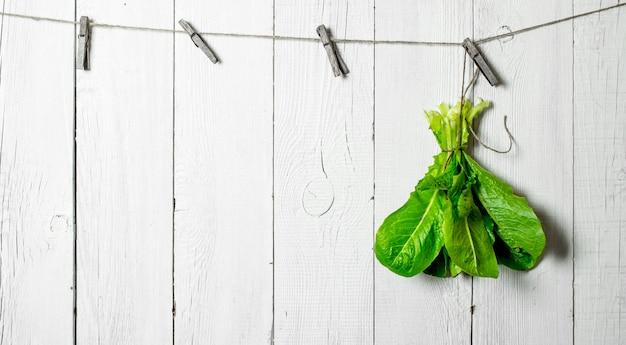 Pęczek świeżych ziół na sznurku na białej drewnianej ścianie