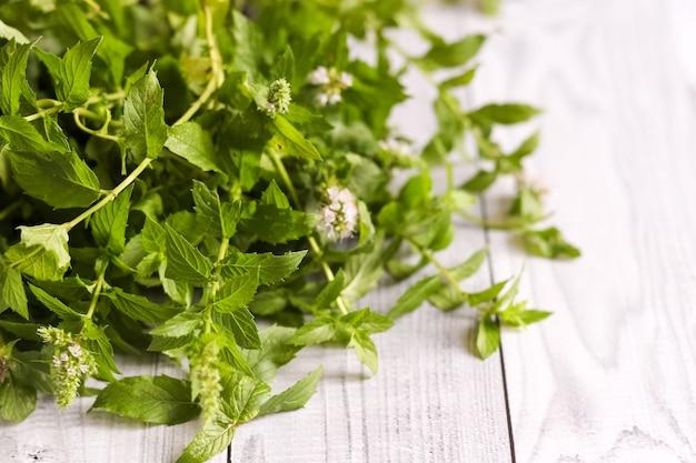 Pęczek zielonych świeżych ziół miętowych