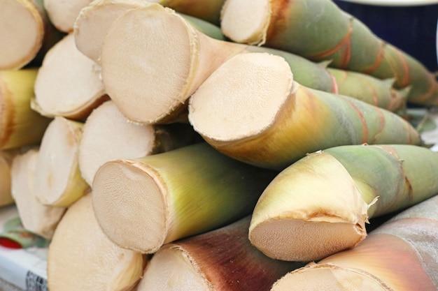 Pęd bambusa