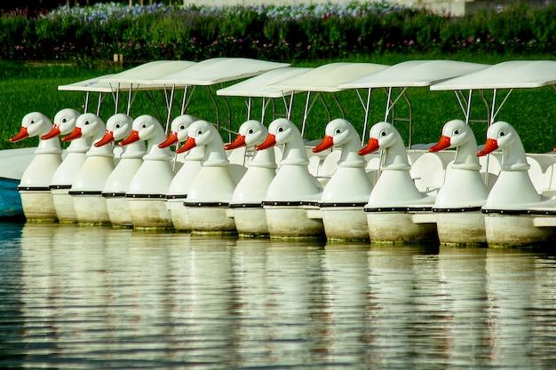 Pedałowe łodzie unosi się w wodzie przy parkiem.