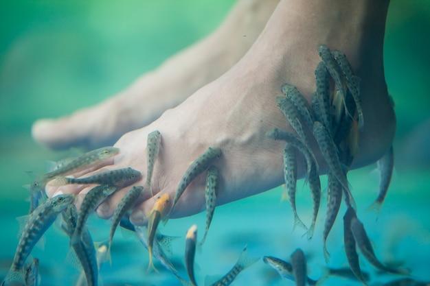 Pedicure fish spa, fish spa pedicure, rufa garra fish spa pedicure massage treatment, zbliżenie stóp i ryb w wodzie.